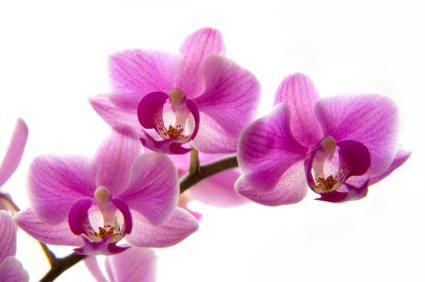 schmuck in pantone 39 s farbe 2014 radiant orchid ren sim ren sim blog. Black Bedroom Furniture Sets. Home Design Ideas
